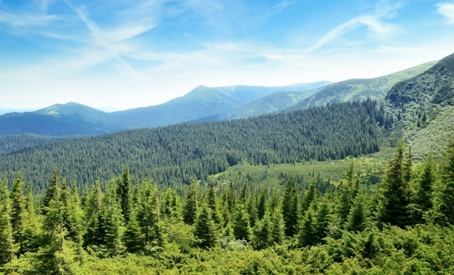 Suprafața pădurilor a crescut, anul trecut, cu 9.127 ha