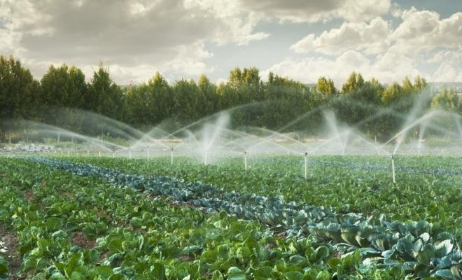 CE îşi propune ca, până în 2030, 25% din suprafața terenurilor agricole să fie exploatate în regim ecologic