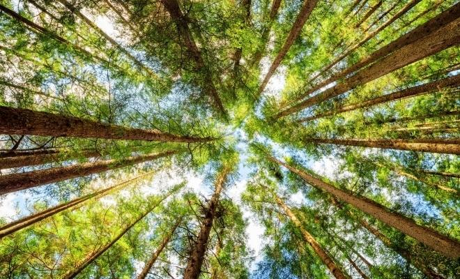 Directorul Romsilva: 12.600 ha teren vor fi reîmpădurite în 2019