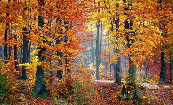 Consiliul UE a publicat concluziile privind revizuirea Strategiei UE pentru păduri