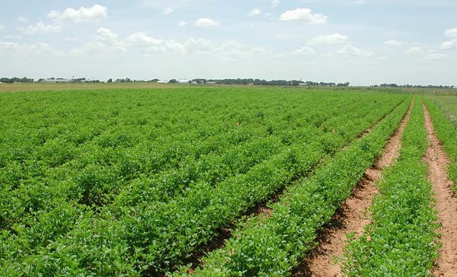 Secretar de stat: România trebuie să ajungă la o suprafaţă de 500.000 ha certificate în agricultură bio până în 2021