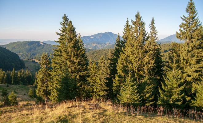 APIA: Astăzi începe sesiunea de depunere a cererilor de sprijin pentru prima împădurire şi crearea de suprafeţe împădurite