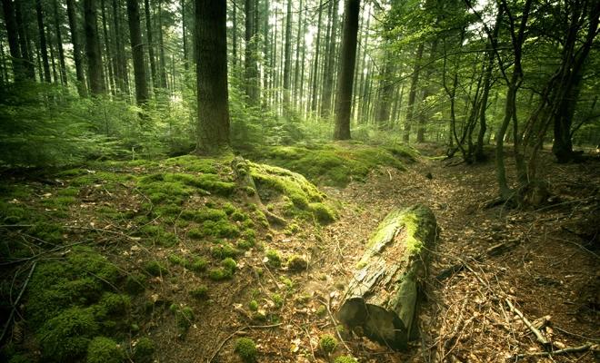 Costel Alexe: ONG-urile şi asociaţiile de mediu vor avea dreptul legal, ca parteneri ai Ministerului Mediului, să intre în pădurile statului