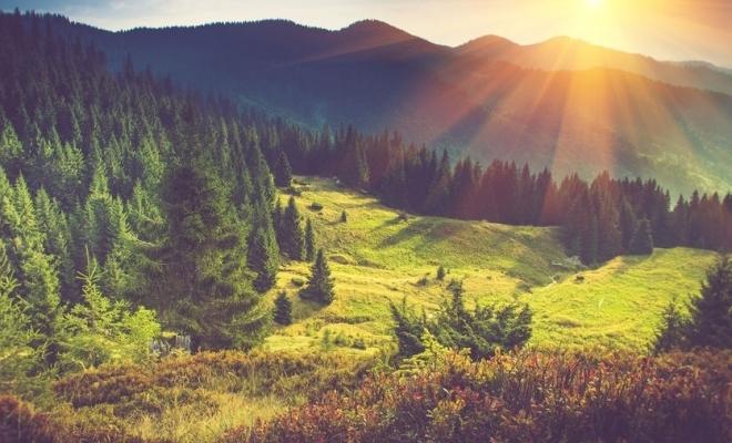 """Costel Alexe: """"Planul nostru este să demarăm cea mai mare extindere a fondului forestier din ultimii 30 de ani"""""""