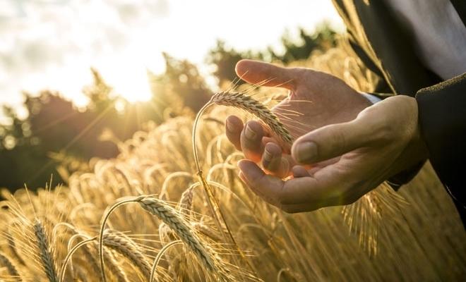UNSAR: Grindina, furtuna şi ploile torenţiale au generat peste 96% dintre despăgubirile plătite fermierilor