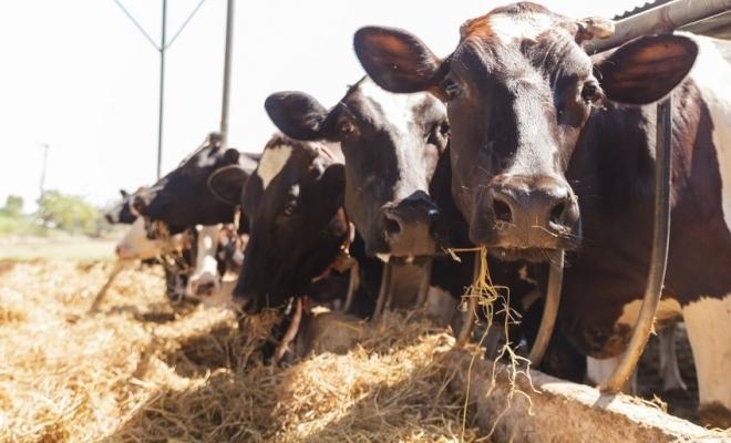 CE a aprobat o schemă în valoare de 7,4 milioane de euro destinată României pentru a sprijini întreprinderile care își desfășoară activitatea în sectorul creșterii bovinelor, în contextul pandemiei de coronavirus