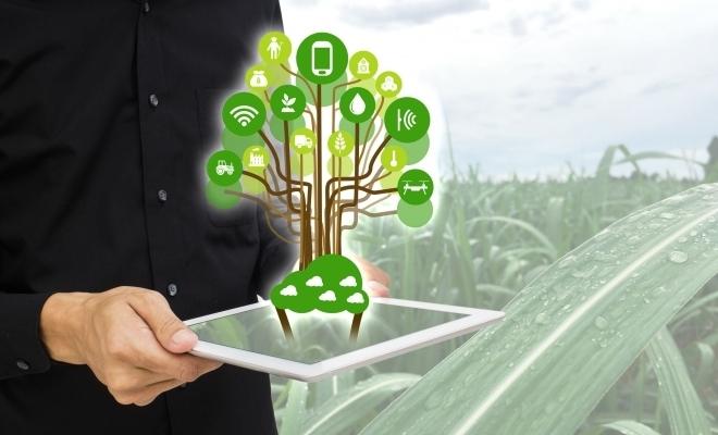 Ministrul Agriculturii: Oportunitatea care ni se oferă prin strategia Green Deal este de a dezvolta piaţa publică locală