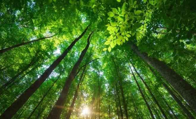 MMAP: Proiectul de Ordin pentru aprobarea Procedurii de emitere a autorizației de mediu, în dezbatere publică