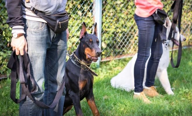 Proiect inedit în România: Câini special dresați vor recunoaște persoanele infectate cu SARS-CoV-2 după miros