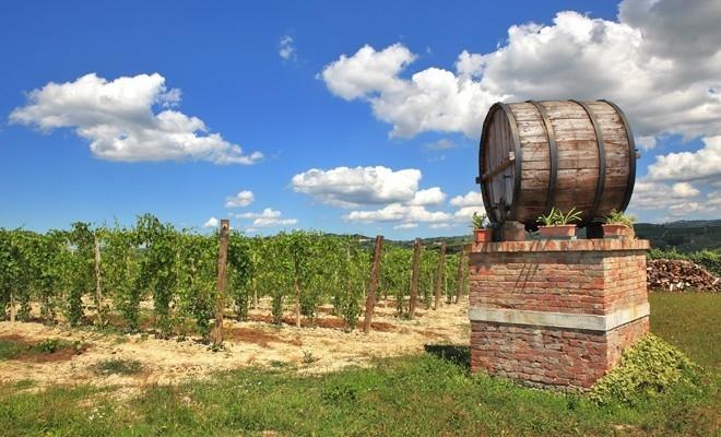 Măsuri de sprijin pentru sectorul vitivinicol